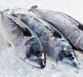 Insula frischer Fisch