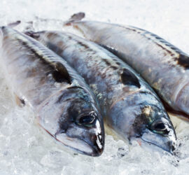 Friske fisk fra Insula