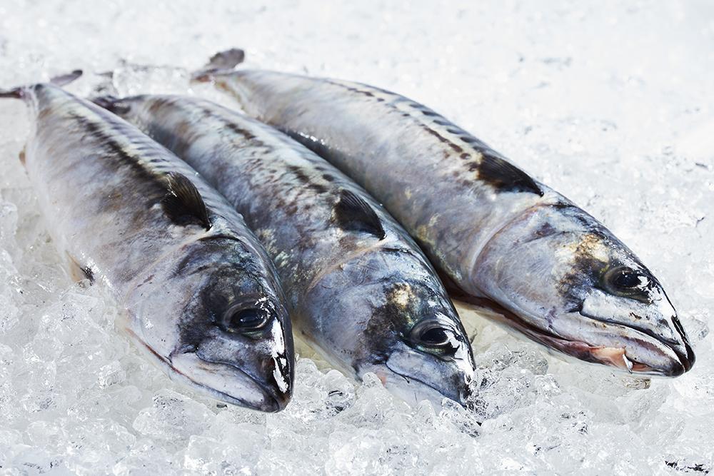 Friske Fisk fra Hvide Sande
